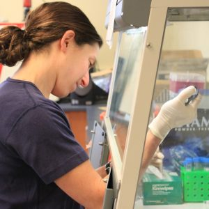 Dr. Shelby O'Connor works under a biosafety hood at the UW–Madison and WNPRC AIDS Vaccine Laboratory. (M. Spoon photo)