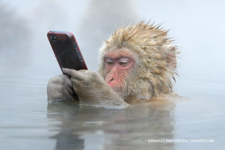 Japanse macaque steals iPhone from tourist