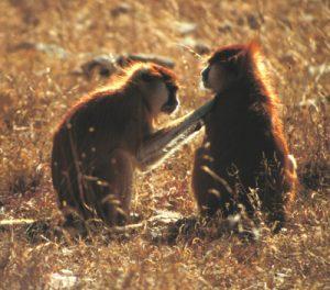 2 Patas grooming