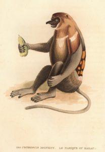 Proboscis artwork