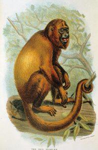 Red howler monkey artwork
