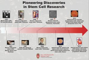A timeline of stem cell research breakthroughs.